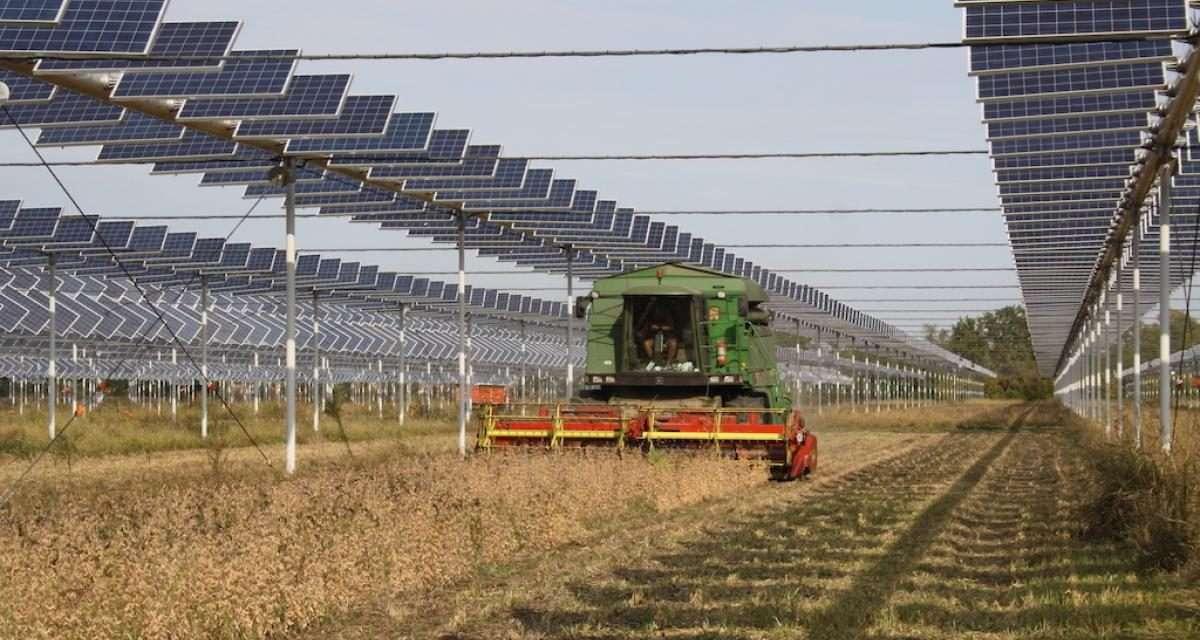 Rinnovabili: l'agrovoltaico è il futuro